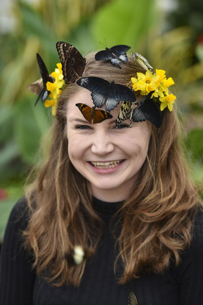 Thousands of exotic butterflies to spread their wings at Blenheim Palace