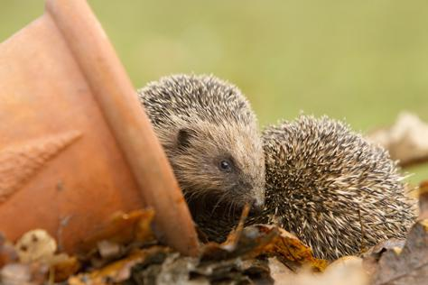 Housebuilder partners with RSPB to give tips for wildlife watching in Wiltshire