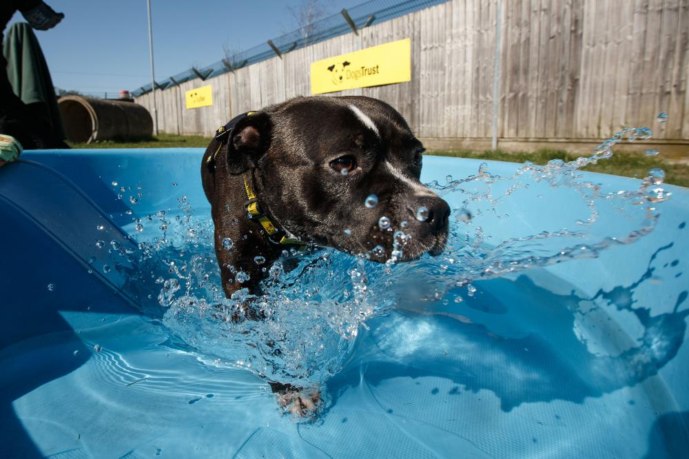 Dogs Trust offers hot tips to keep canine companions cool during lockdown