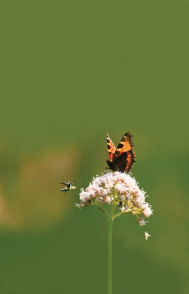 Insects are a vital part of our ecosystems, says Wiltshire Wildlife Trust