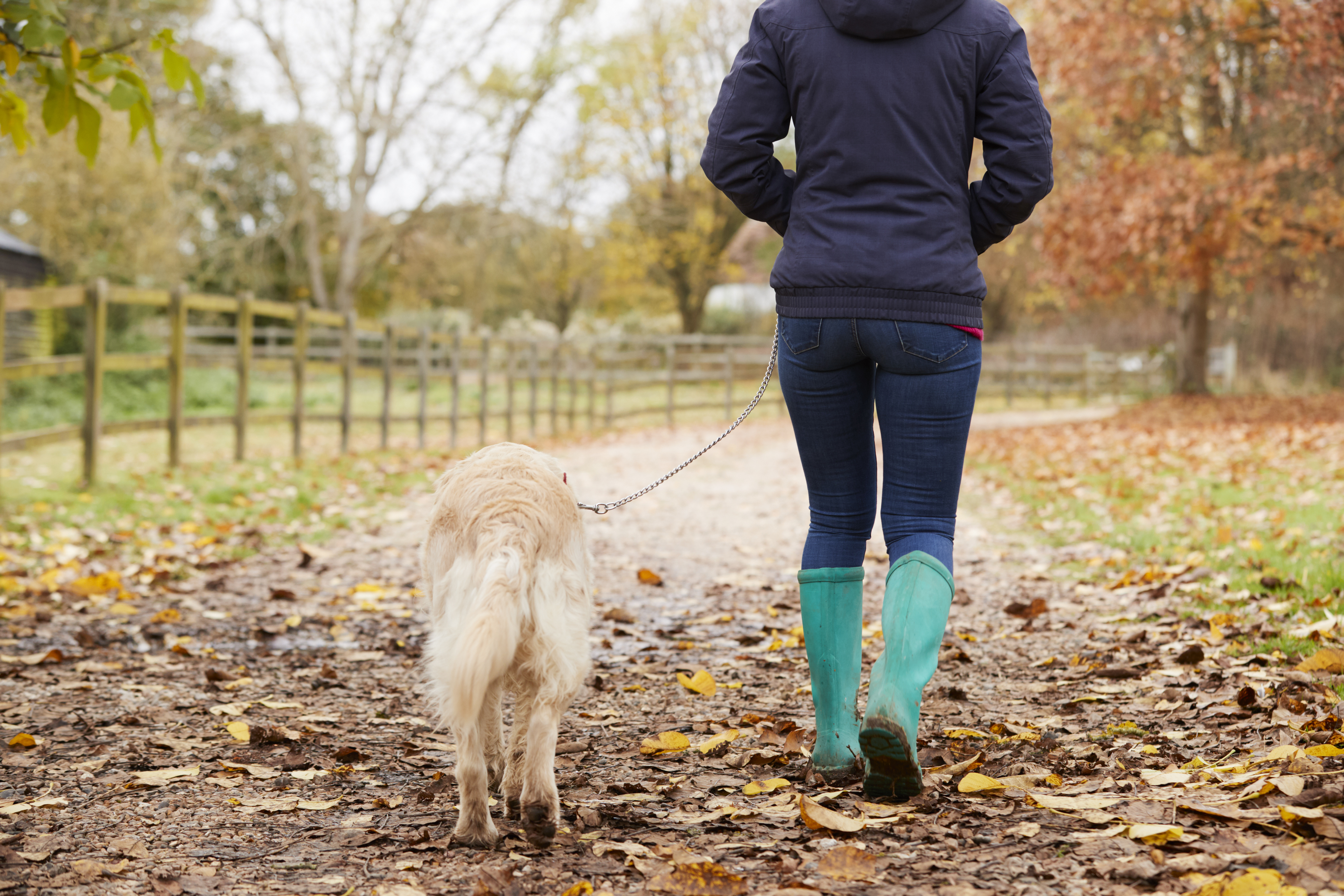 National dog theft survey has Wiltshire PCC backing