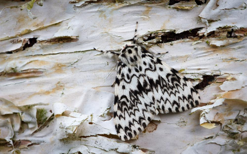 British and Irish moths are on the move