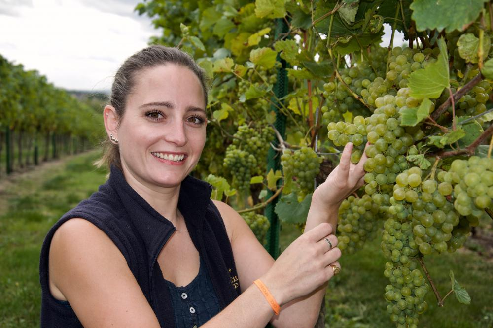 Early harvesting starts at Swindon's nearest vineyard as growers prepare for a vintage crop