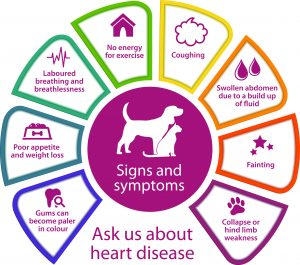 early signs of heart disease in dogs