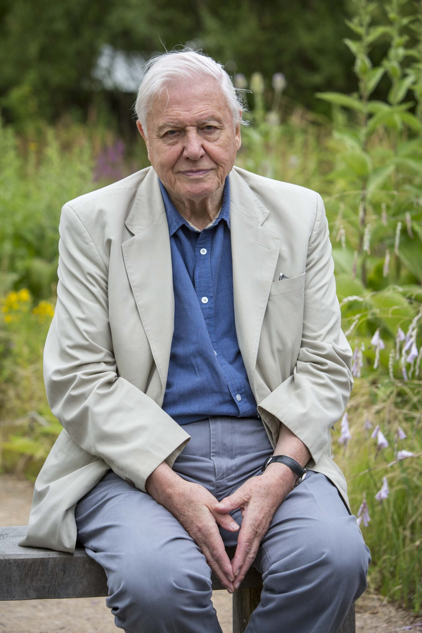 Sir David Attenborough backs butterfly charity as it celebrates 50th anniversary weekend