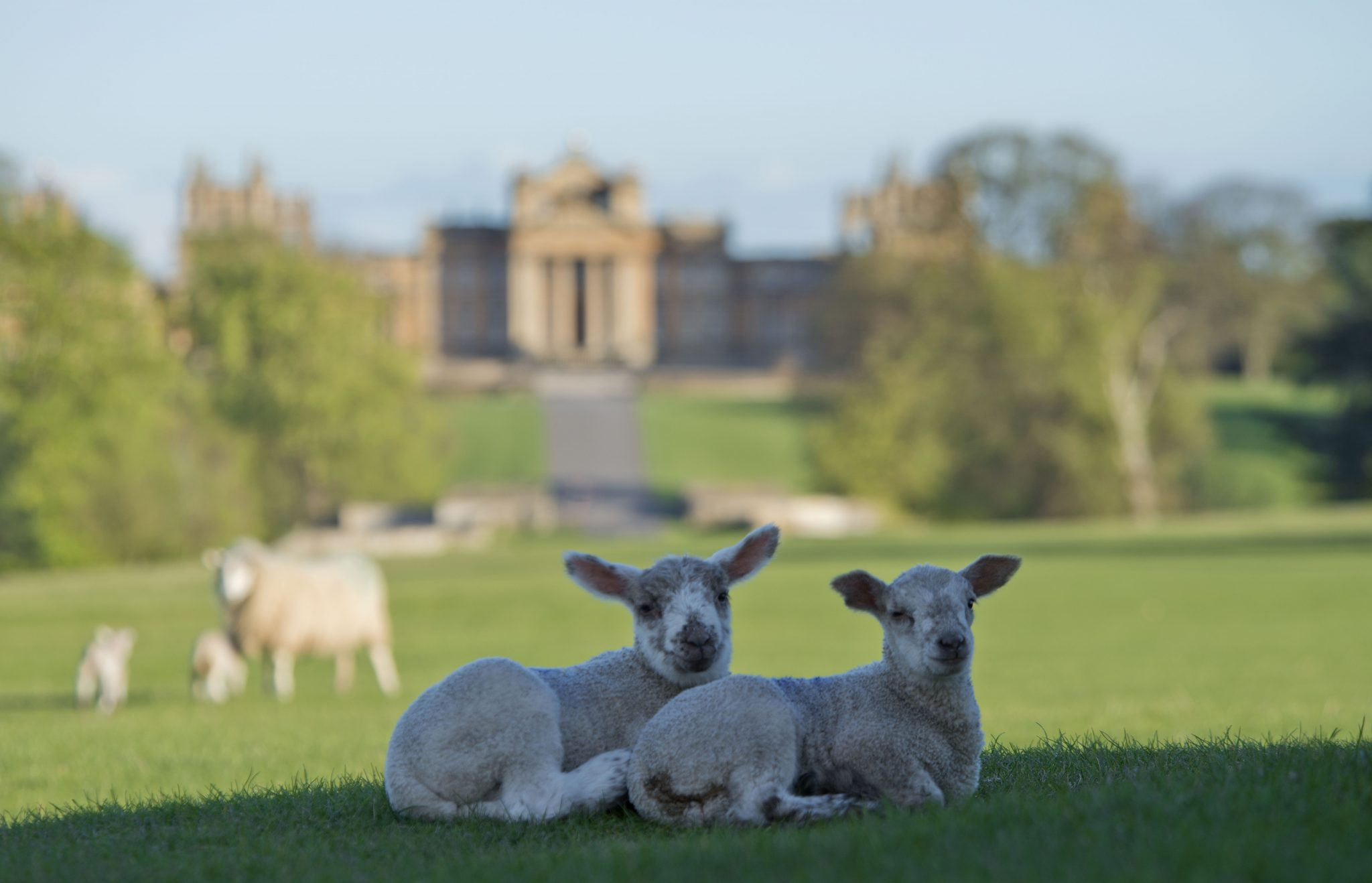 Ten things to do and discover this May Half Term at Blenheim Palace